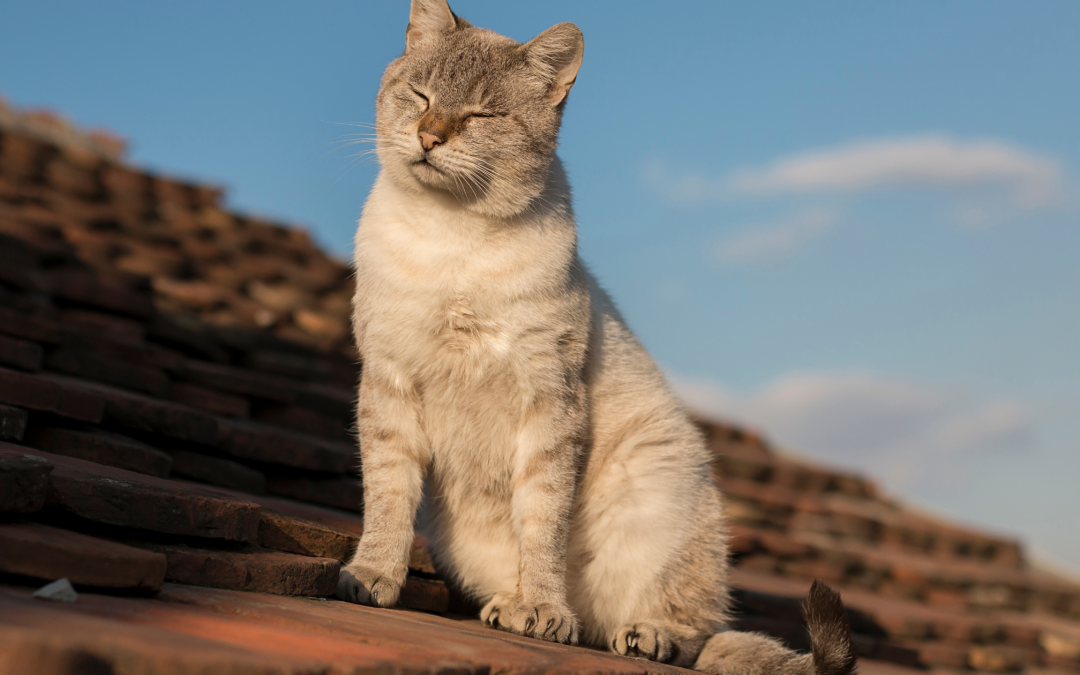 Florida Winter: 8 Roofing Tips